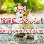 犬 脂漏症