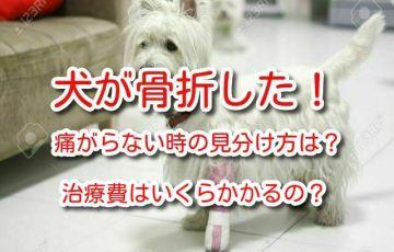 犬 骨折 治療費