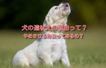 犬 遠吠え 理由