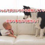 赤ちゃんて犬にいつから接触していいの?湿疹や事故の可能性も!