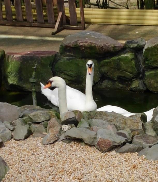 松江フォーゲルパーク 鳥の様子