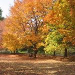 640px-Autumn_on_the_Indiana_University_campus 2