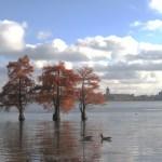 Clear-Lake-WNLP