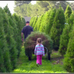 family-christmas-tree-farm