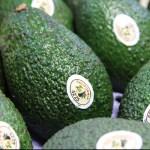 find-ca-avocados-header
