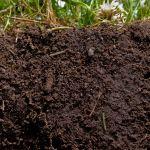 soil-and-roots-close-up-NRCS-credit-USDA
