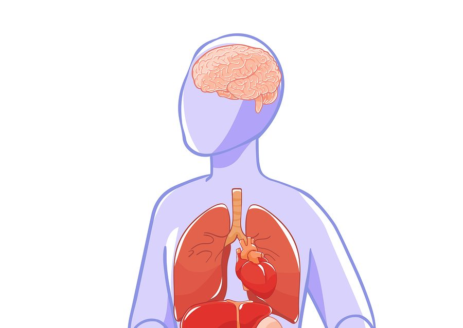 Vector Layout Organs: Brain, Heart, Lungs, Stomach, Kidneys, Liv