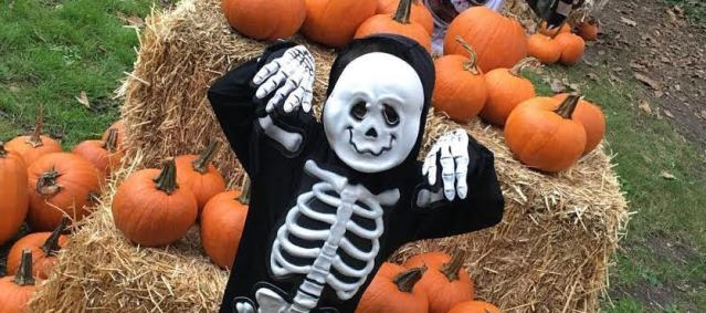 THE JACK 'O'LANTERN Jamboree is set for Oct. 28 in Garden Grove, and a pumpkin patch is open at Westminster Mall.