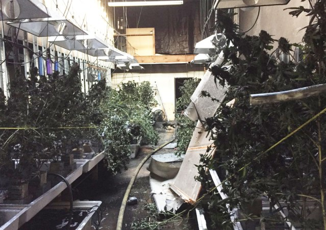 A BLAZE in West Garden Grove revealed a large indoor marijuana growing operation (GGFD photo).