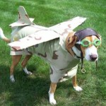 BEST-Halloween-Pet-Costumes-Funny-Animal-Costume-Ideas-for-Dogs-and-Cats-unique-holloween-top-ever-pets-19