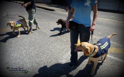 Reila, Pippa & Opal crossing the road.