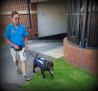 Pippa and volunteer puppy raiser Jan, on a walk in Houghton.