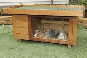 rabbit hutch 5