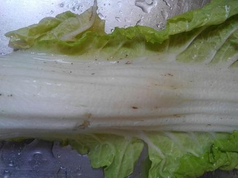 白菜 黒い斑点