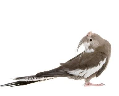 アクリルケージ 鳥 保温