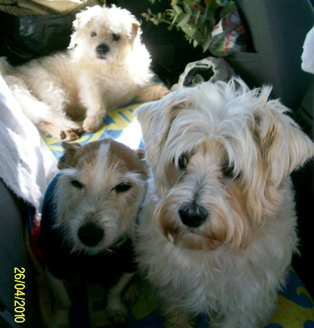 salty ( back), Jack (left) Joffa) all waiting to go for a car ride