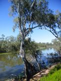 tahbilk cafe on the goulburn river