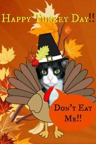 thanksgiving card d