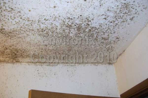 remove black mold on bathroom ceiling orange mold. Bathroom Mold  bathroom mold mold in bathrooms on tile and other