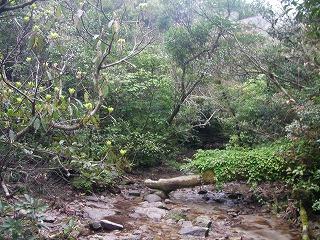 稲尾岳登山道2