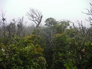 稲尾岳登山道4