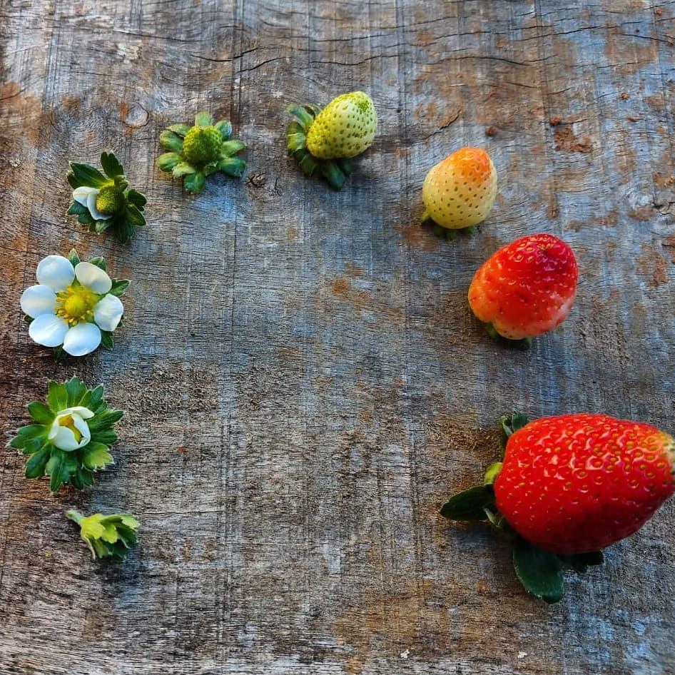 Ягодите – плодът на боговете