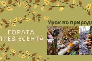Урок по природа – Гората през есента