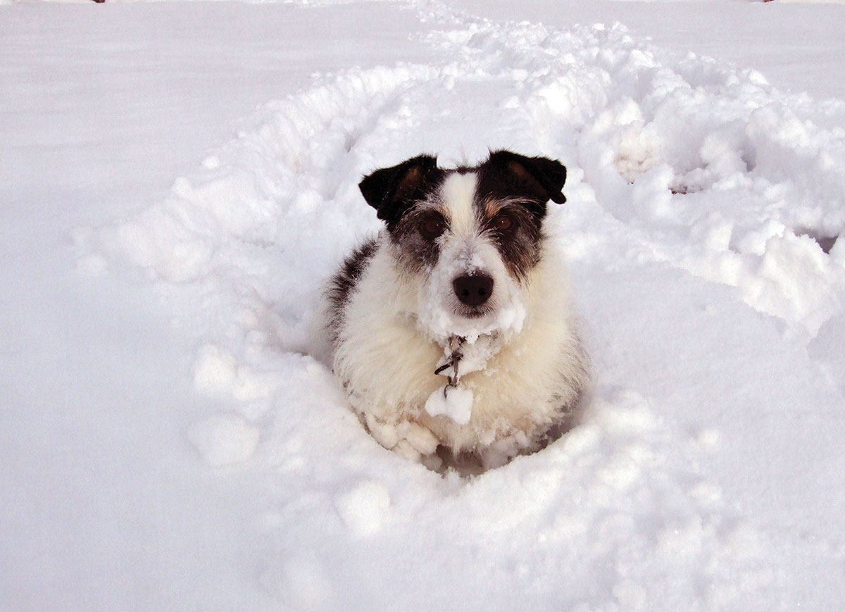 Bark Bytes… Brrr…It's Cold Out There!!