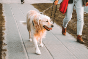 Bark Bytes… Do You Know How To Walk Your Dog?