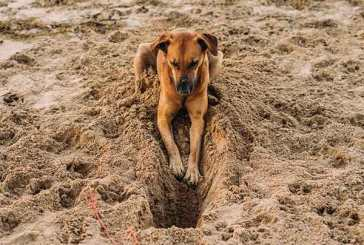 Bark Bytes… Does Your Dog Dig?
