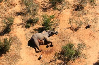 Gajah Mati Botswana