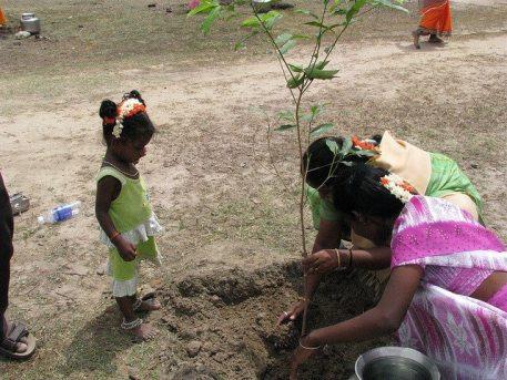 piplantri pokok