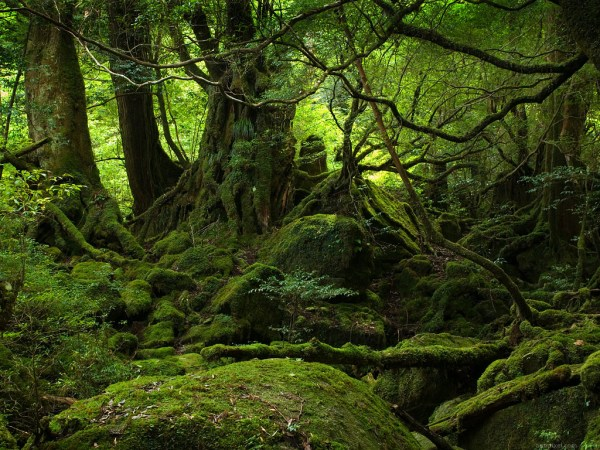 Yakushima_forest_1024x768-600x450 Reinos de Toran: O Protetorado Morth e suas Cidadelas
