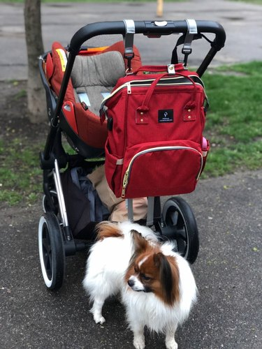 Pofunuo Diaper Bag Backpack with USB Phone Charger & Stroller Straps photo review