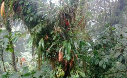 The Epiphytic Art of Comments