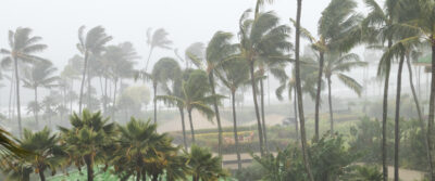 Hurricane blowing palm trees.