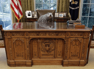 Punxsutawny Phil in the Oval Office.