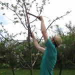 When To Prune Fruit Trees Orchard People Fruit Tree Care