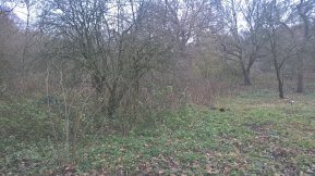 Before: a dense 5 foot tall forest of nettles