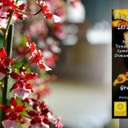 Expo-vente Orchidées à Andeville – avril 2018
