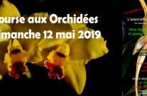 3ème bourse aux Orchidées et plantes rares – Andeville – mai 2019