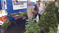Homegrown Harvest will have table-top and bigger trees and fresh wreaths.