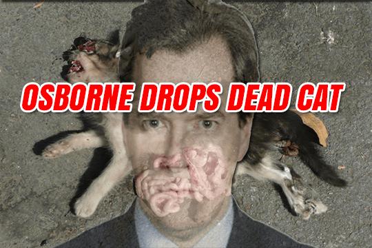 OSBORNE-DEAD-CAT