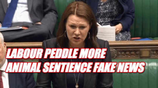 Labour Peddle More Animal Sentience Fake News