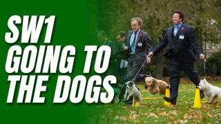 Westminster's Dogged Return to Post-Covid Normality #NationalDogDay