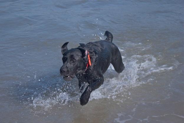 Monty has retrieved the ball