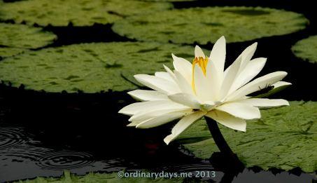 Love the lily season