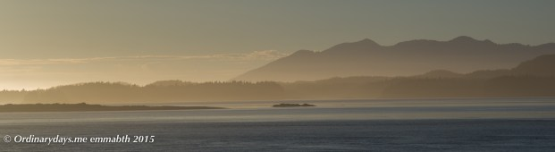 Tofino harbor sunset 2