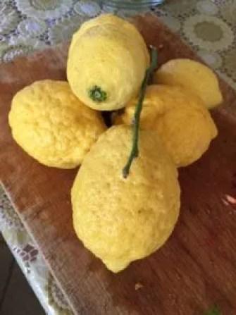 Cedro lemon