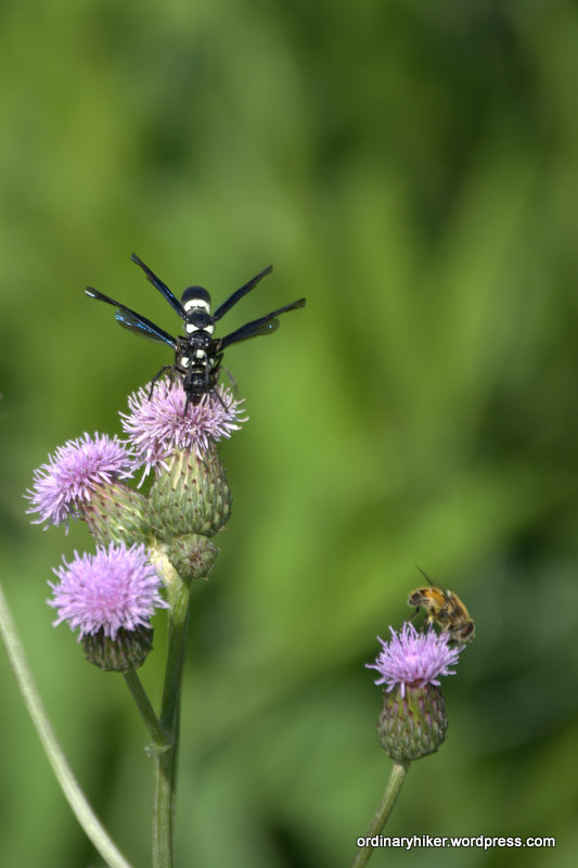 Pair of Summer Wasp, Black and White with Bee
